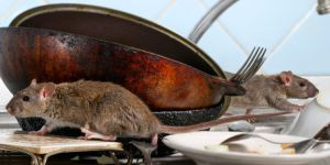 pengendali tikus