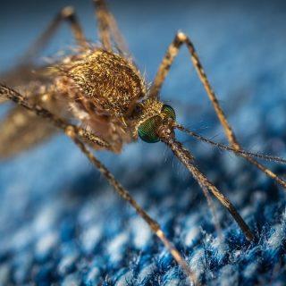 mosquito 3743404 1280